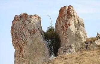 Çatlayan kaya arasında ağaç büyüdü