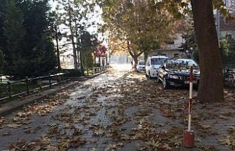 Eskişehir'de sonbahar güzelliği