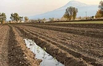 Iğdır'da aromatik bitki yetiştiriciliği başladı