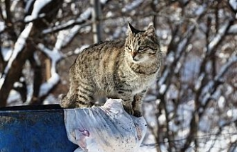 Aç kalan kediler çöp konteynerlerine dadandı