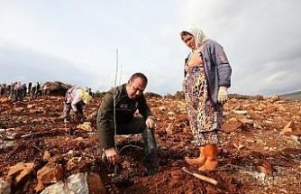 Bal ormanı için 156 bin fidan toprakla buluşacak