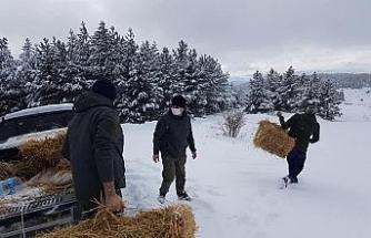Çankırı'da yaban hayvanları kara kışta unutulmadı