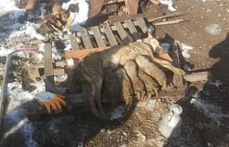 Çöken metruk binanın enkazında kalan köpek ve yavrularını itfaiye kurtardı