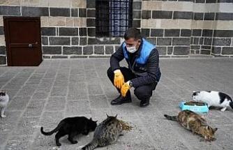Diyarbakır'da sokak hayvanları için belirli noktalara mama bırakıldı