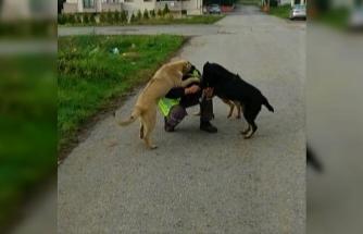 Sokak hayvanları kendilerini besleyen belediye ekiplerini heyecanla karşıladı