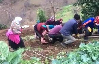 Uçurumun kenarında kalan inek uzun uğraşlar sonucu kurtarıldı