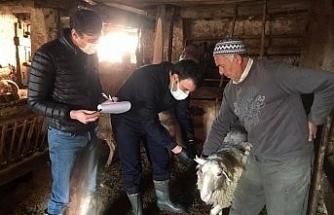 Çavdarhisar'da ''Şap'' aşısı kampanyası