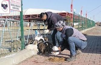 Erciş'te sokak hayvanları unutulmadı