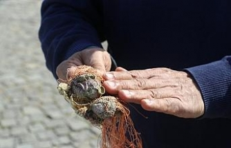 Kızıldeniz göçmeni midyeler, Akdeniz ekosistemini mahvediyor