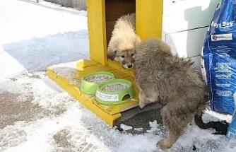 Malazgirt'te sokak hayvanları için barınma kulübeleri yapıldı