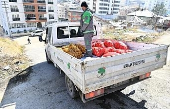 Mamak'ta ihtiyaç sahibi ailelere soğan dağıtıldı