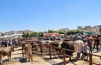 Nevşehir'de Hayvan Pazarı 1 Mart'ta yeniden açılıyor