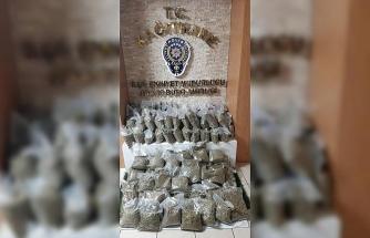 """(Özel) İstanbul'da dev """"bonzai"""" operasyonu: 74 kilogram ele geçirildi"""