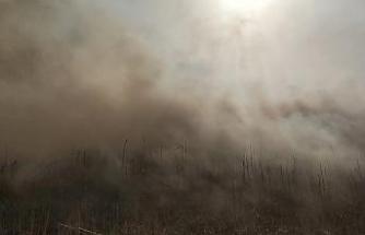 Samandağ'da sazlık alanda yangın