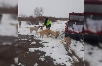 Sungurlu Belediyesi sokak hayvanlarını unutmadı