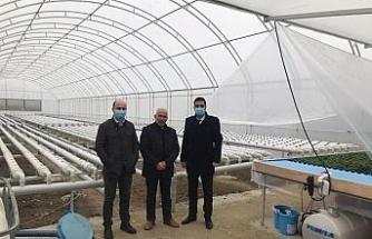 Sungurlu'da kurduğu 500 metrekare serada topraksız marul yetiştiriyor