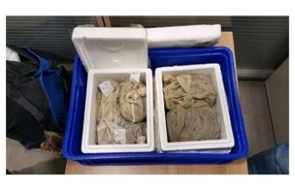 Sabiha Gökçen Havalimanı'nda 3 bin 300 tıbbi sülük ele geçirildi