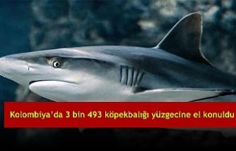 Kolombiya'da 3 bin 493 köpekbalığı yüzgecine el konuldu
