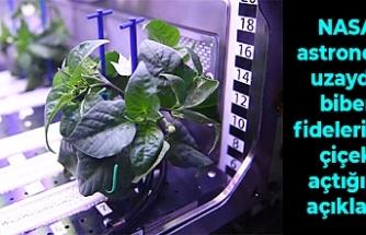 NASA astronotu uzayda biber fidelerinin çiçek açtığını açıkladı