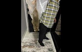 Sultangazi'de dev fare kabusu, gece yarası evi terk ettiler