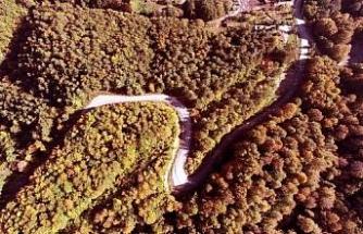 Zonguldak'ta kent ormanında sonbahar güzelliği