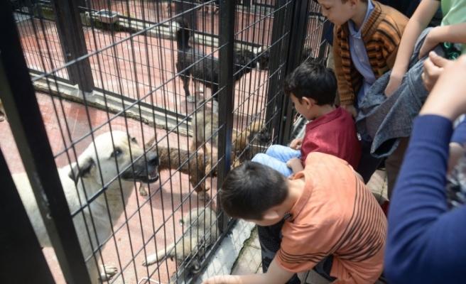 Bursa'da bir güzel proje: Kent ekosistemi ve sokak hayvanları