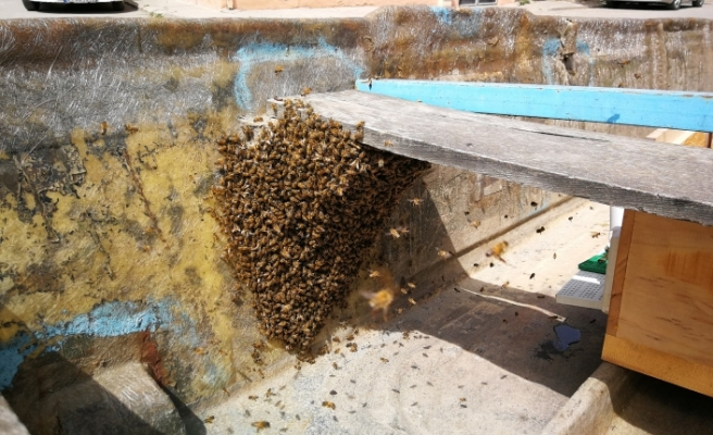 Bursa'da yüzlerce arı firarda