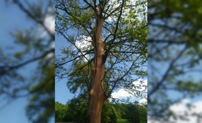 Bursa'da ağaca yıldırım düştü