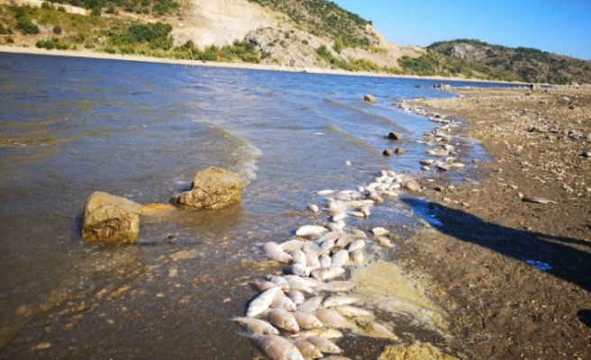 Bursa'da kıyıya vuran balıklar korkuttu!