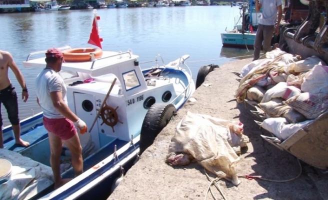 Denizden ölü tavuk topladılar!