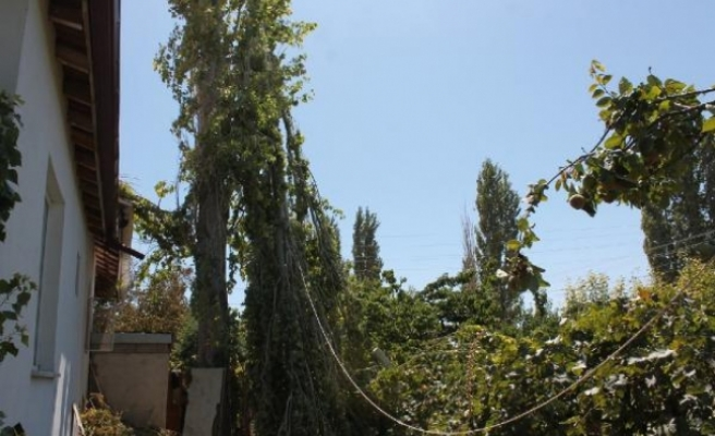 Kestiği ağacın dalına başı sıkıştı! Hayatını kaybetti
