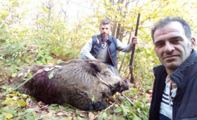Bursa'da avcılar 316 kiloluk yaban domuzunu vurdular