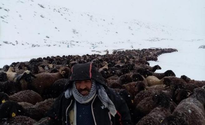 Karlıova'da mahsur kalan 2 bin 500 koyun kurtarıldı