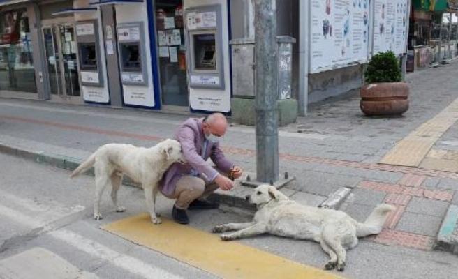 AK Parti milletvekili Işık görevlileri ziyaret edip, sokak hayvanlarını besledi