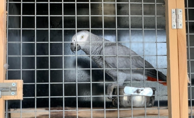 İstanbul'da papağan operasyonu: 66 papağan kurtarıldı