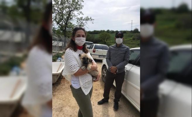 Sahiplendiği yavru köpek ölünce avukattan şikayetçi oldular