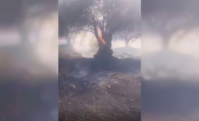 Balıkesir'den zeytinlik alanda yangın