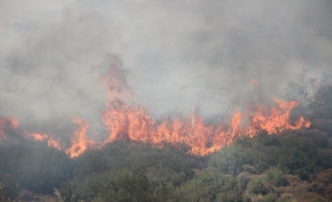 İzmir'de Menderes'in ardından Bornova'da da yangın çıktı