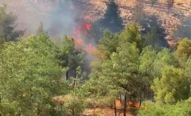 Şanlıurfa'da orman yangını