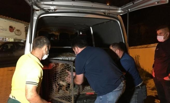 Bartın'a uyuşturularak bırakılan 20 köpeği bırakan belediye tespit edildi