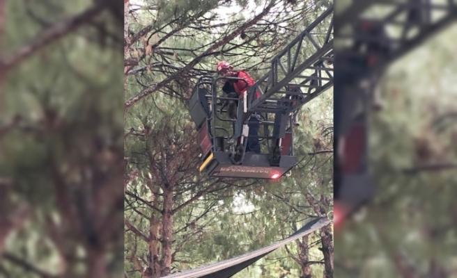 Balıkesir'de ağaçta mahsur kalan kediyi itfaiye kurtardı