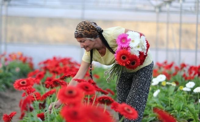 Hobi olarak çiçekçiliğe başladı, kurduğu seralarda taleplere yetişemiyor