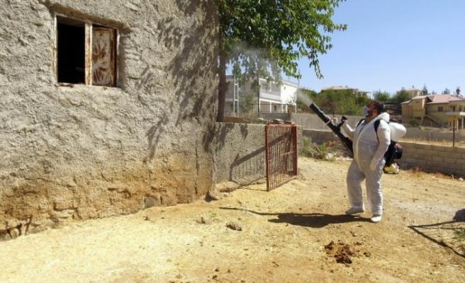Kahramanmaraş'ta 'Üçgün' hastalığına karşı ilaçlama