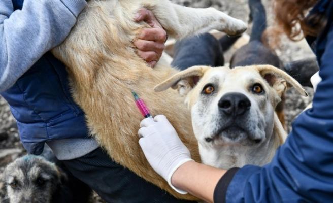 Ankara Büyükşehir Belediyesi tarafından gönüllü hayvansever barınaklarında kuduz aşısı kampanyası başlatıldı