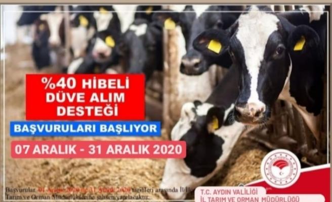 Aydın'da çiftçilere düve alım desteği verilecek
