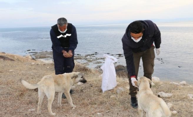 Erciş Belediyesi sokak hayvanlarını unutmadı