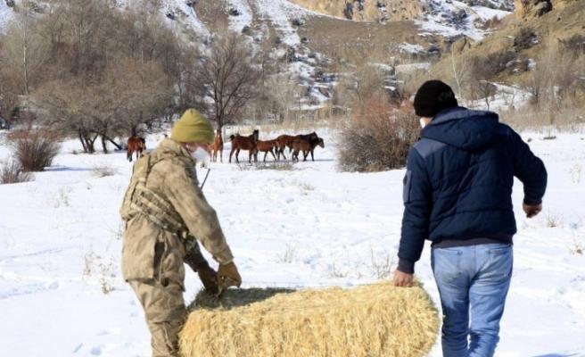 Erzincan'da yılkı atları için yem bırakıldı