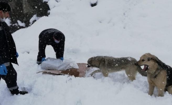 Hakkari'de sokak hayvanları karlı günlerde de unutulmadı