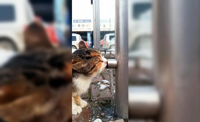 Susuz kalan kedinin buzu yalaması objektiflere yansıdı