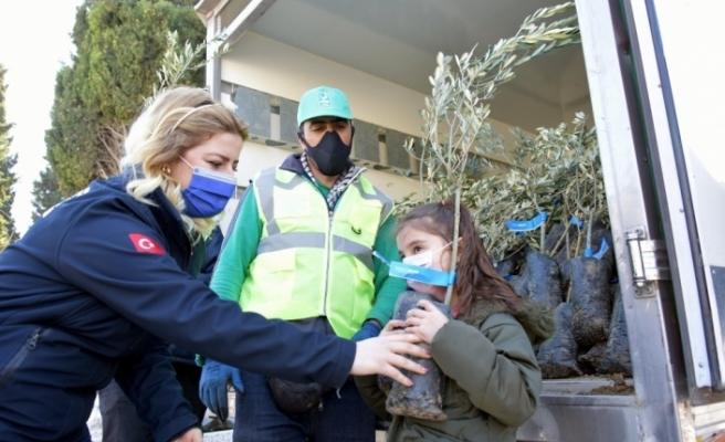 Aliağa Belediyesinin zeytin fidanı dağıtımları sürüyor